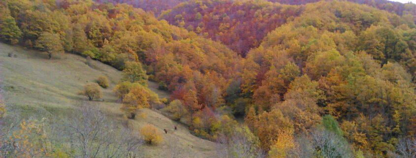 Bosque de Vegabaño